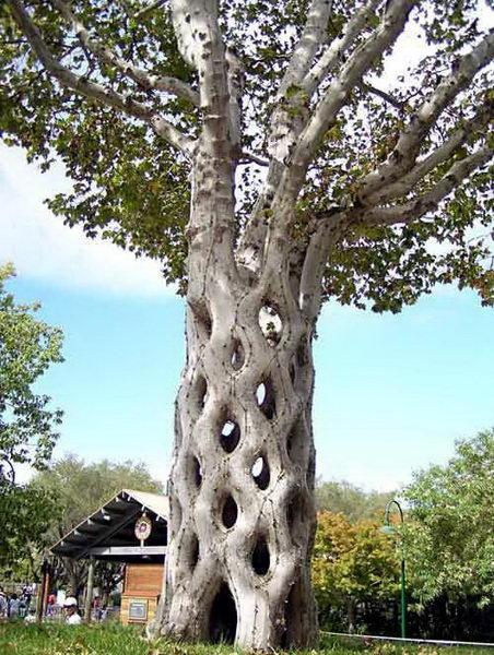 Необычные деревья 07 dobrosos