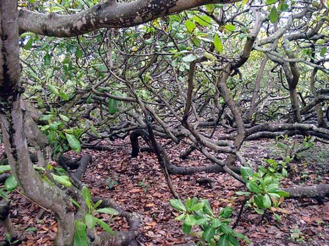 Необычные деревья 09 dobrosos