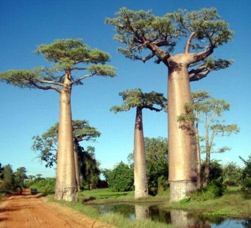 Необычные деревья 10 dobrosos