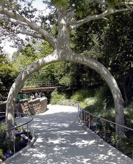 Необычные деревья 11 dobrosos