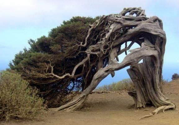 Необычные деревья 13 dobrosos