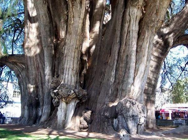 Необычные деревья 15 dobrosos