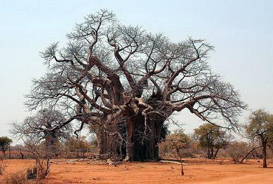 Необычные деревья 17 dobrosos