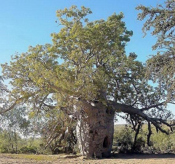 Необычные деревья 19 dobrosos