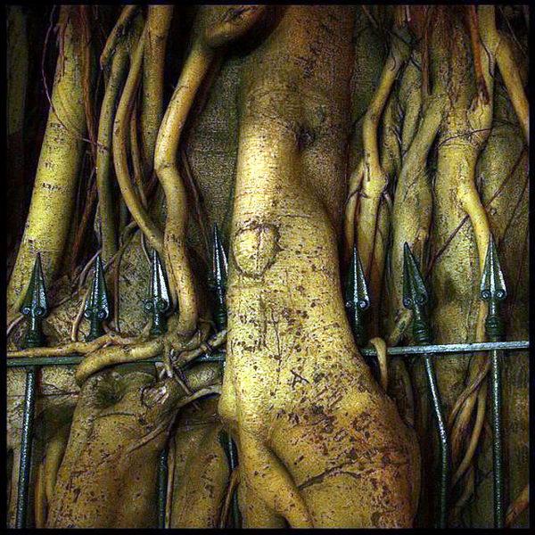 Необычные деревья 22 dobrosos