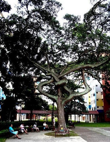 Необычные деревья 25 dobrosos