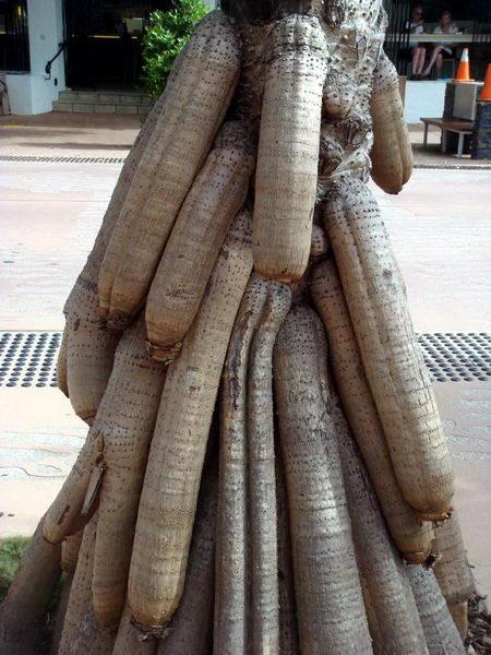 Необычные деревья 26 dobrosos