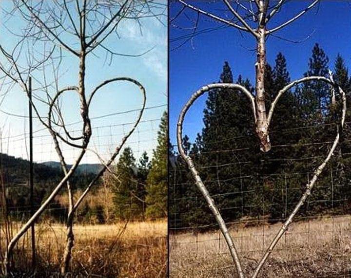 Необычные деревья 30 dobrosos