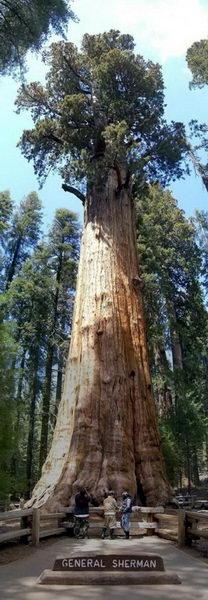 Необычные деревья 32 dobrosos