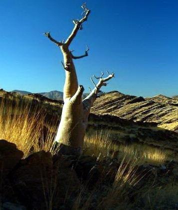 Необычные деревья 36 dobrosos