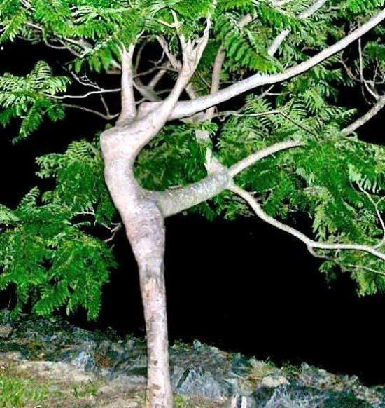 Необычные деревья 37 dobrosos