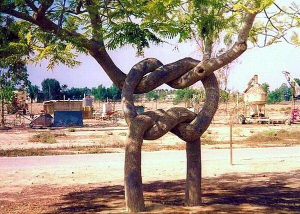 Необычные деревья 39 dobrosos