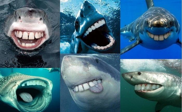 Акулы с человеческими зубами (17 фото)