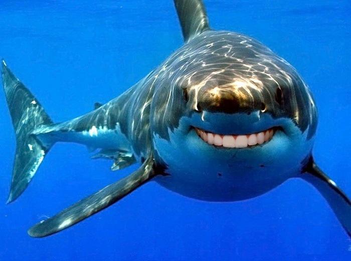 Акулы с человеческими зубами 02
