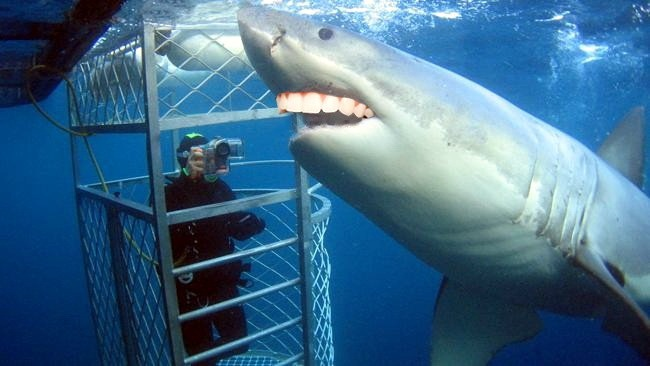 Акулы с человеческими зубами 03