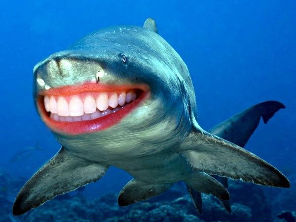 Акулы с человеческими зубами 06