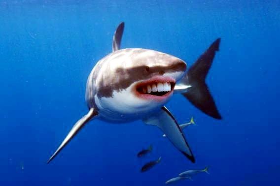 Акулы с человеческими зубами 07