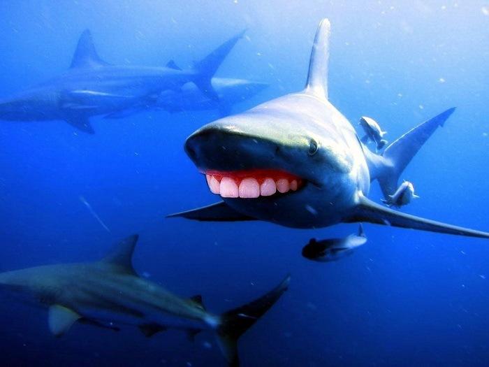 Акулы с человеческими зубами 11