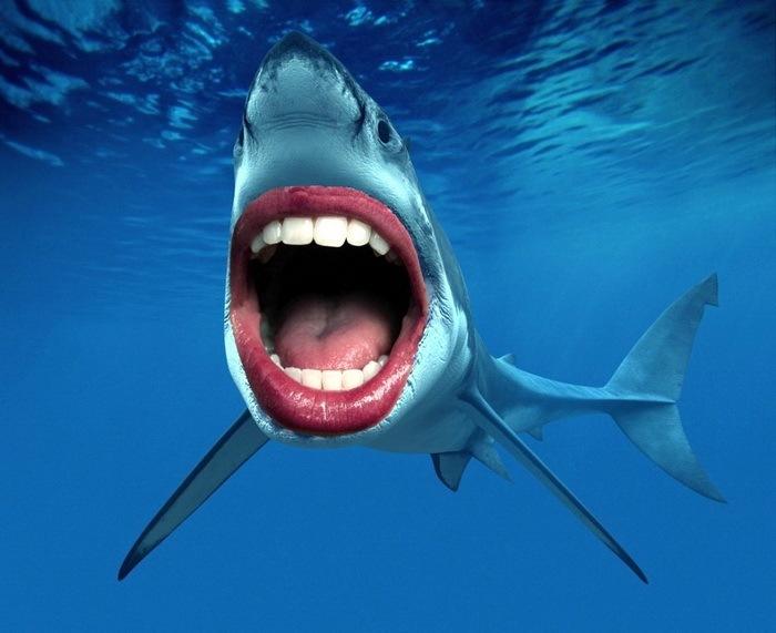 Акулы с человеческими зубами 15