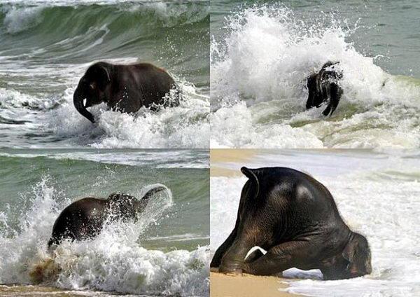 1. Слонята тоже дети. Слонята любят купаться.