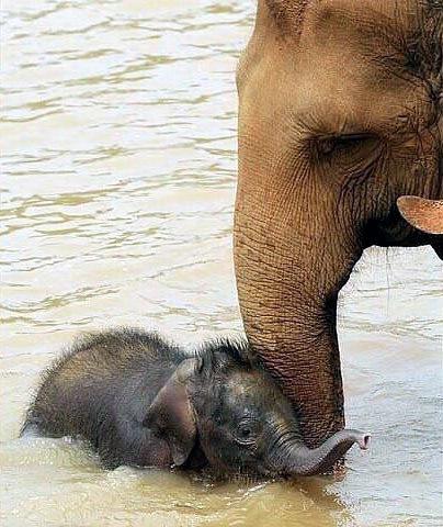 Слонята тоже дети 06