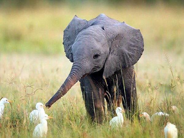 Слонята тоже дети 09
