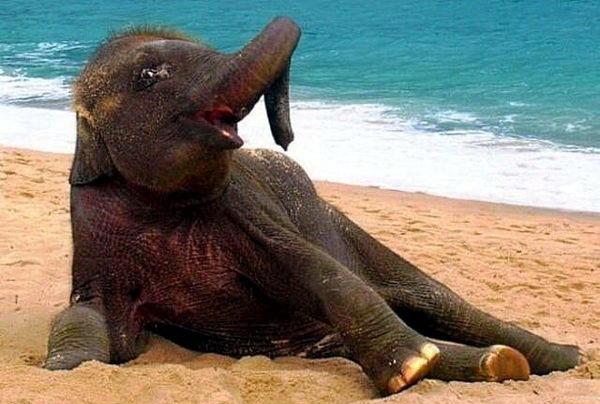 Слонята тоже дети 10