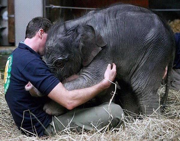 Слонята тоже дети 15