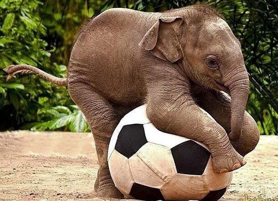 Слонята тоже дети 17
