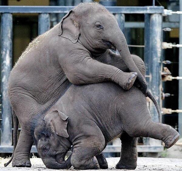 Слонята тоже дети 20