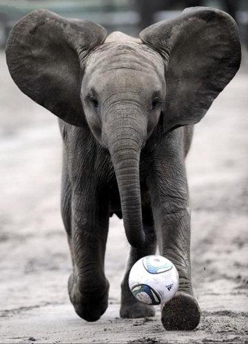 Слонята тоже дети 21