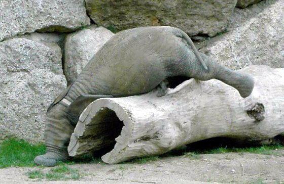 Слонята тоже дети 24