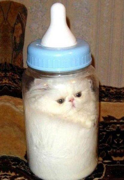 Коты это жидкость 10
