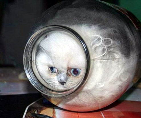 Коты это жидкость 13