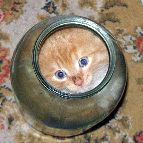 Коты это жидкость 14
