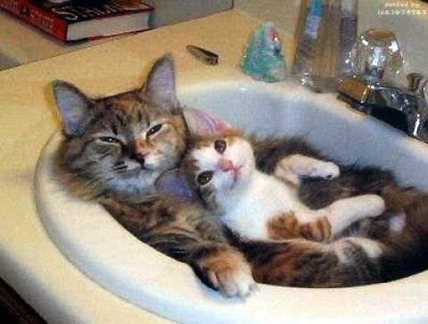 Коты это жидкость 15