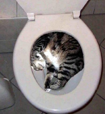 Коты это жидкость 20