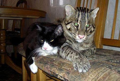 Огромный необычный кот 06