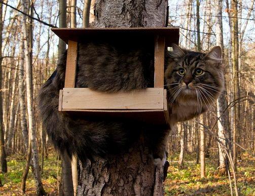 Смешные коты (23 фото)