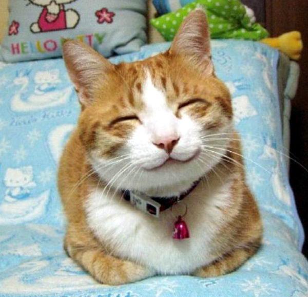 смешные коты 02