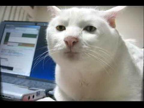 смешные коты 06