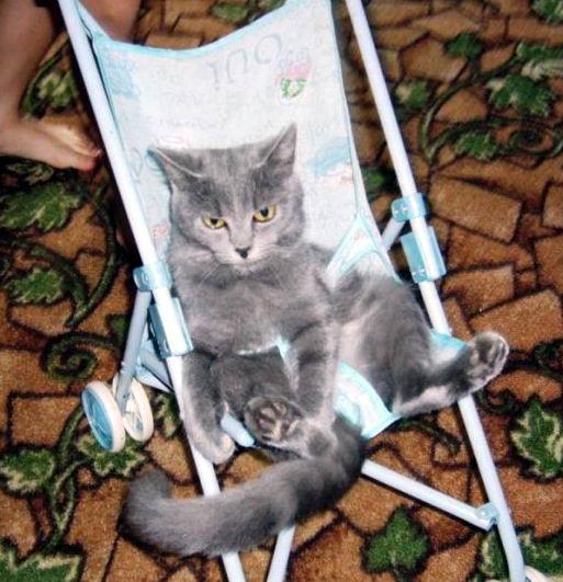 смешные коты 15