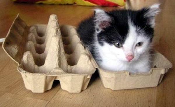 смешные коты 18