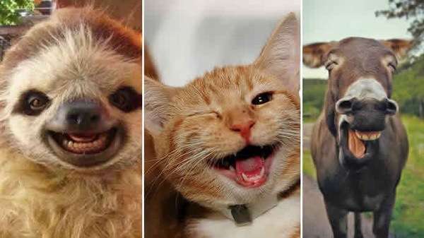 Милые животные (20 фото)