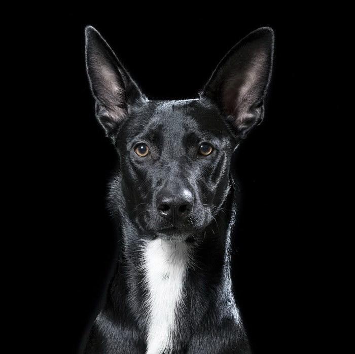 портреты кошек и собак