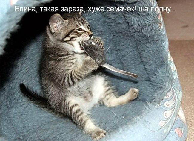 смешные кошки и собаки