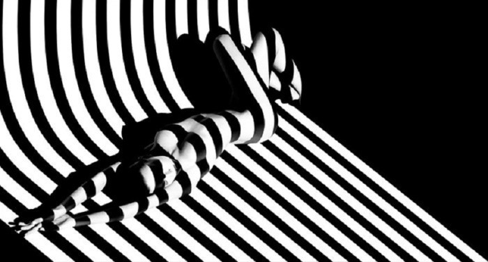 фото тень зебра
