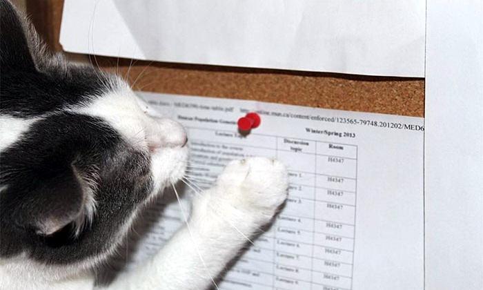 Запланированное преступление кота