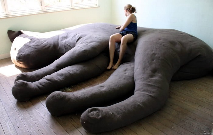 кот-диван