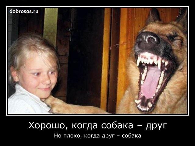Хорошо, когда собака - друг: Но плохо, когда друг - собака